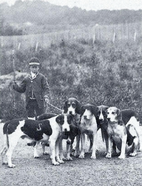 Marcassin, valet de chiens - Photo tirée de la revue Vènerie n°106 - 1992