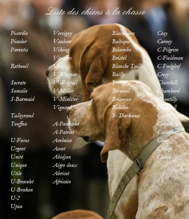 Liste des chiens 2008-2009 - Vie du chenil - Rivecourt