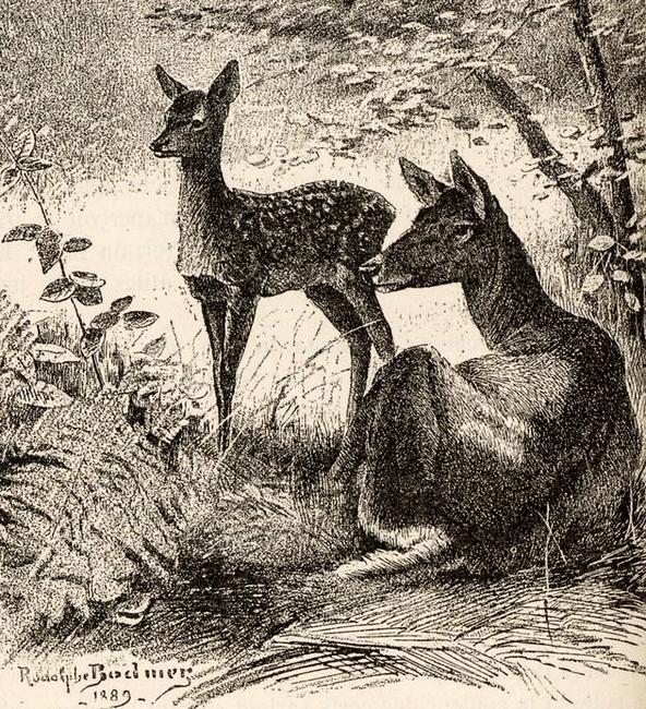 Illustration tirée du Manuel de Vènerie française - Emmanuel Le Couteulx de Canteleu (1890) - Hachette et Cie (Paris) - BnF (Gallica) 18