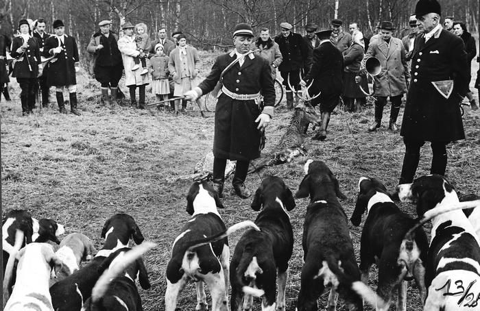 Saison 1960-1961 - Photo de Georges Hallo - Don de M. J.-G. Hallo à la Société de Vènerie