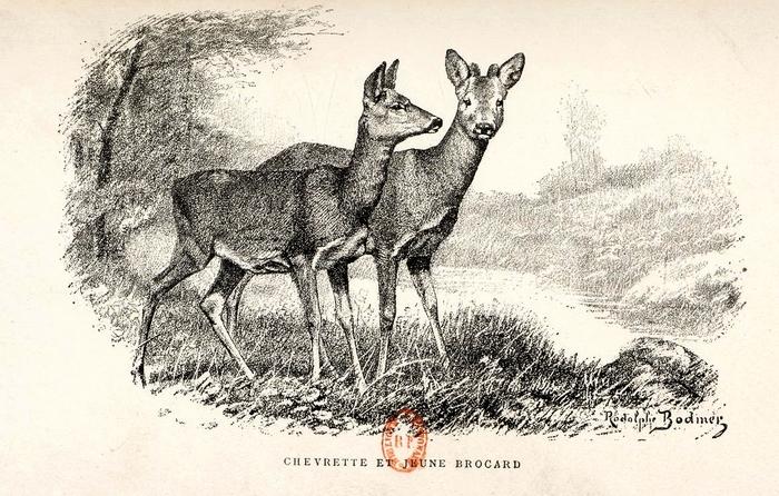 Illustration tirée du Manuel de Vènerie française - Emmanuel Le Couteulx de Canteleu (1890) - Hachette et Cie (Paris) - BnF (Gallica) 21