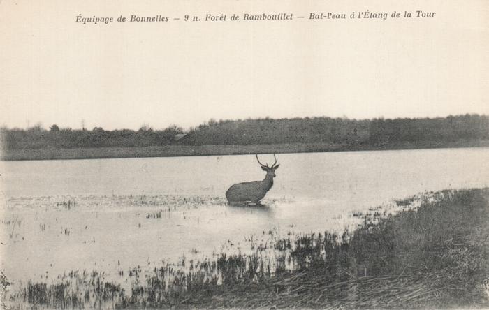 Equipage de Bonnelles Rambouillet (2)