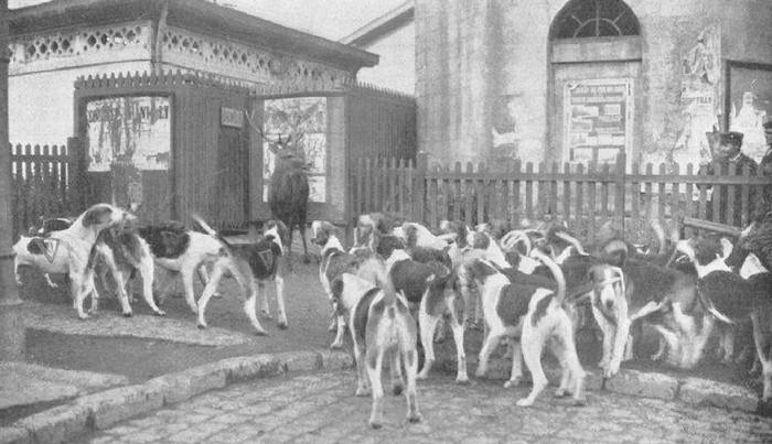Hallali (à la gare de Chantilly ?) - Archives de la Société de Vènerie