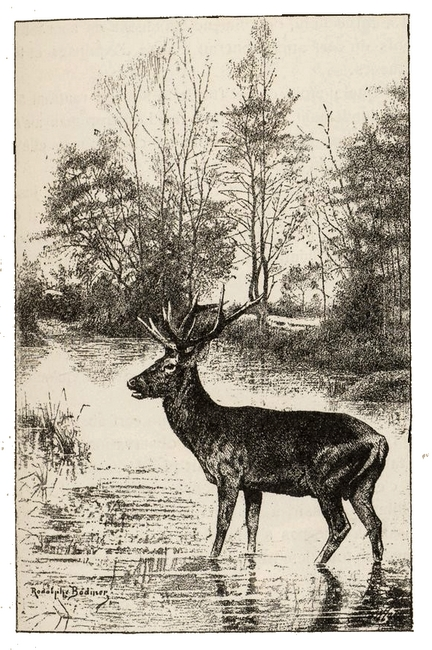 Illustration tirée du Manuel de Vènerie française - Emmanuel Le Couteulx de Canteleu (1890) - Hachette et Cie (Paris) - BnF (Gallica) 13