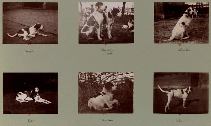 La meute (3) - Tiré de l'ouvrage L'Equipage du marquis de Chambray - Photos de Maurice de Gasté (1894) - Bnf (Gallica)