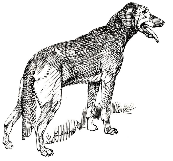 Maraudeur - Illustration tirée de l'ouvrage Écoute en tête de J. Bost-Lamondie (Édition de 1990)