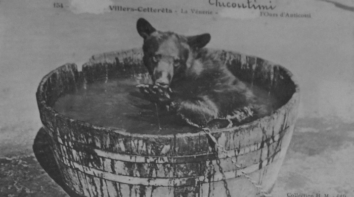Chicoutimi, l'ours de la ménagerie des Menier - Collection A.-P. Baudesson - Don à la Société de Vènerie