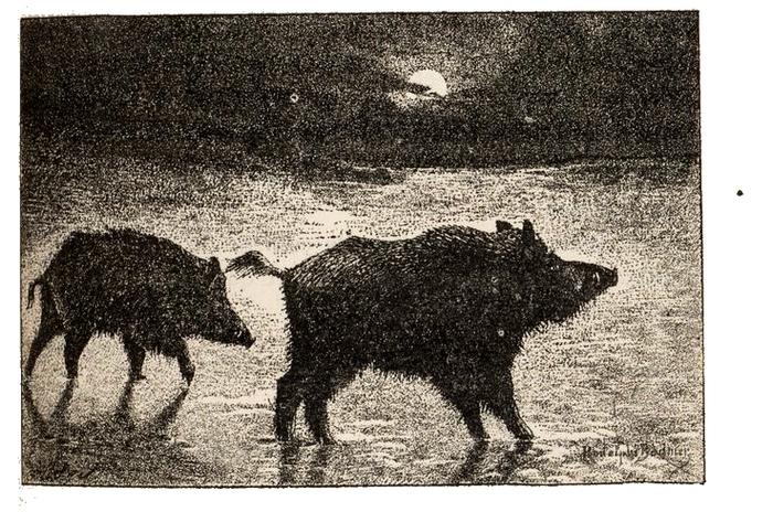 Illustration tirée du Manuel de Vènerie française - Emmanuel Le Couteulx de Canteleu (1890) - Hachette et Cie (Paris) - BnF (Gallica) 16