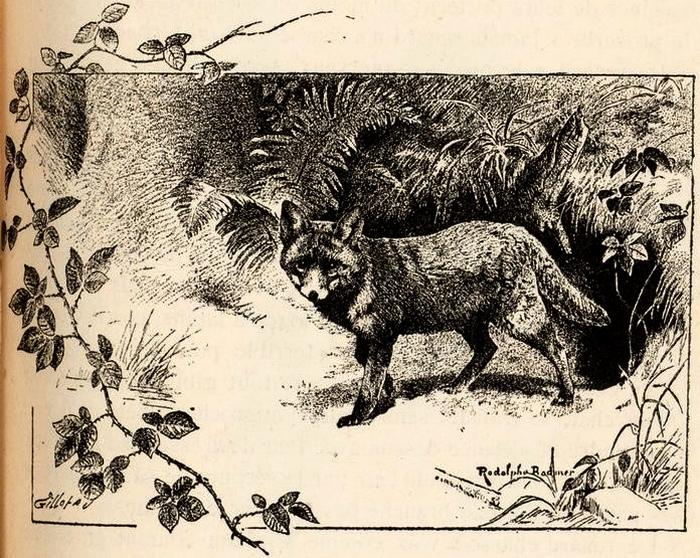 Illustration tirée du Manuel de Vènerie française - Emmanuel Le Couteulx de Canteleu (1890) - Hachette et Cie (Paris) - BnF (Gallica) 15