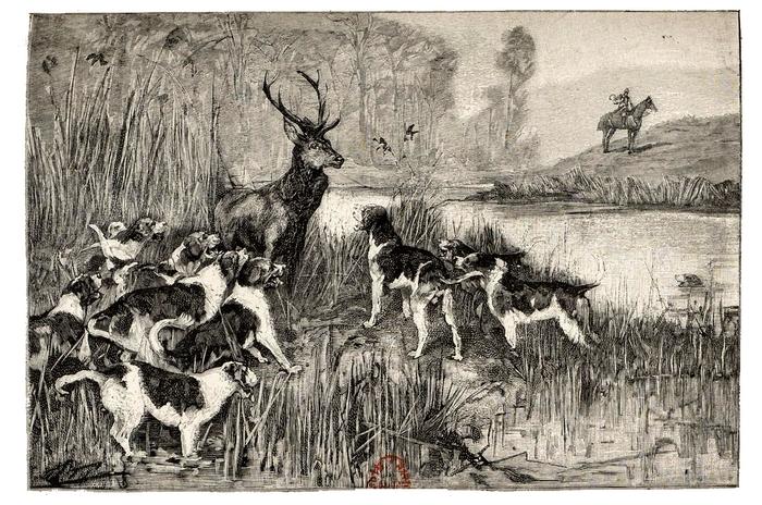 Illustration tirée du Manuel de Vènerie française - Emmanuel Le Couteulx de Canteleu (1890) - Hachette et Cie (Paris) - BnF (Gallica) 1