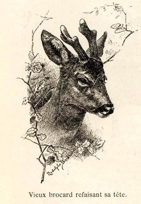 Illustration tirée du Manuel de Vènerie française - Emmanuel Le Couteulx de Canteleu (1890) - Hachette et Cie (Paris) - BnF (Gallica) 11
