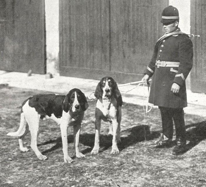 Dollar et Queba, chiens Levesque - BnF (Gallica)