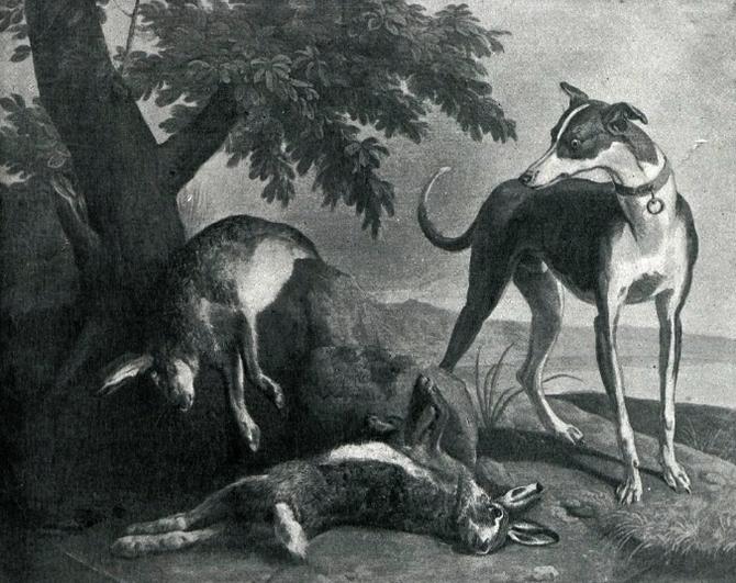Lévriers - Illustration tirée de l'ouvrage La Chasse à travers les Âges - Comte de Chabot (1898) - A. Savaète (Paris) - BnF (Gallica)