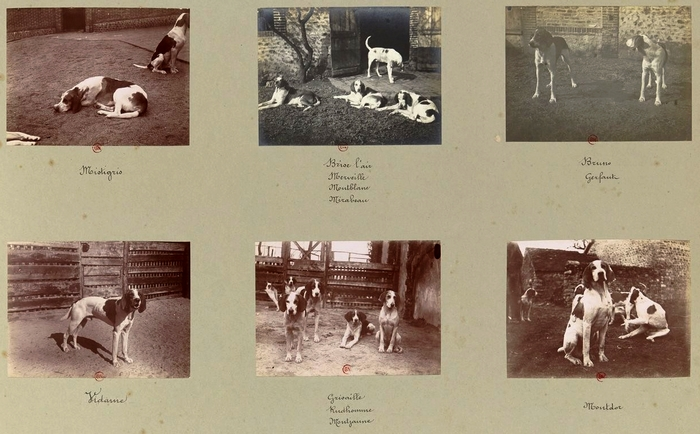 La meute (6) - Tiré de l'ouvrage L'Equipage du marquis de Chambray - Photos de Maurice de Gasté (1894) - Bnf (Gallica)