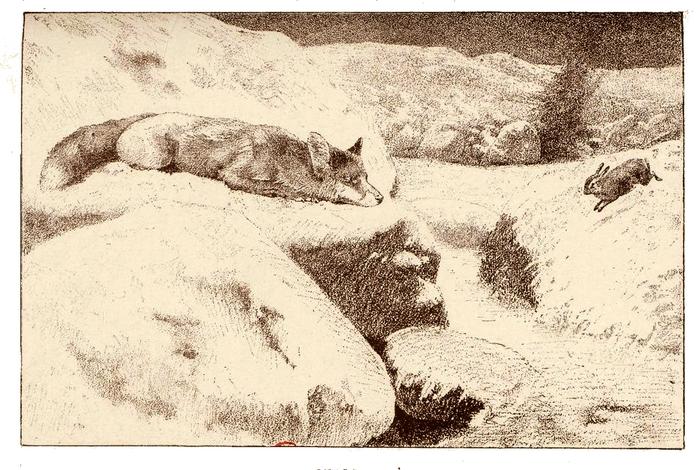 Illustration tirée du Manuel de Vènerie française - Emmanuel Le Couteulx de Canteleu (1890) - Hachette et Cie (Paris) - BnF (Gallica) 14