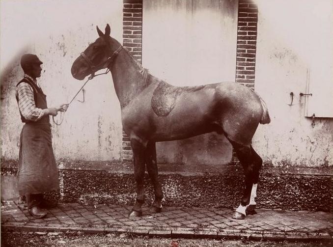 Poney au Comte d'Aubigny - Tiré de l'ouvrage L'Equipage du marquis de Chambray - Photos de Maurice de Gasté (1894) - Bnf (Gallica)