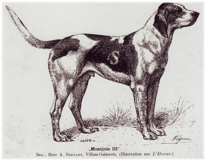 Type de chien Servant - Don de A.-P. Baudesson à la Société de Vènerie