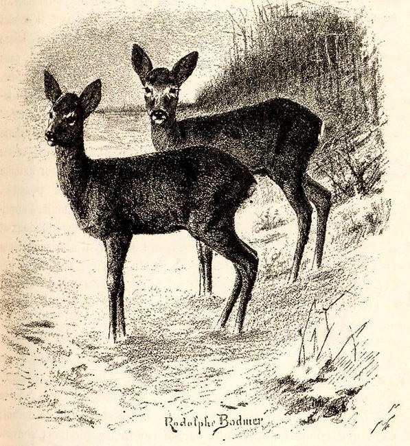 Illustration tirée du Manuel de Vènerie française - Emmanuel Le Couteulx de Canteleu (1890) - Hachette et Cie (Paris) - BnF (Gallica) 20