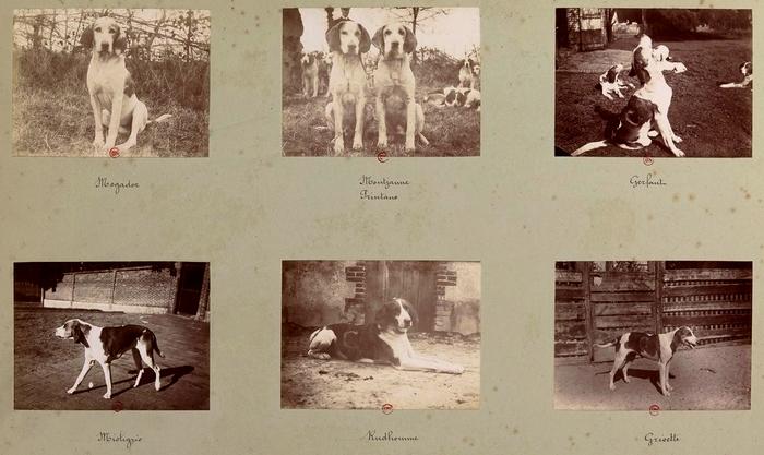 La meute (5) - Tiré de l'ouvrage L'Equipage du marquis de Chambray - Photos de Maurice de Gasté (1894) - Bnf (Gallica)