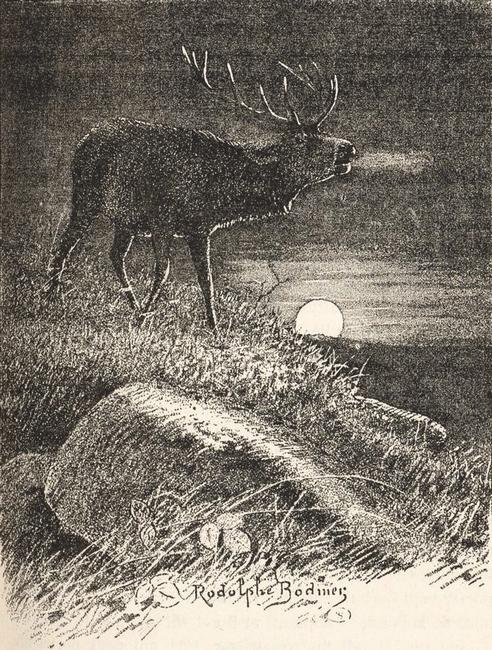Illustration tirée du Manuel de Vènerie française - Emmanuel Le Couteulx de Canteleu (1890) - Hachette et Cie (Paris) - BnF (Gallica) 19