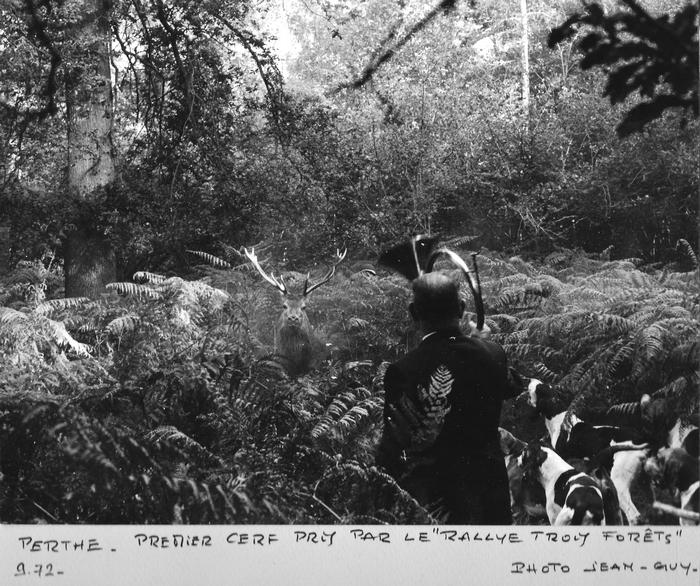 1972 - Abois du premier cerf pris par le Rallye Trois Forêts - Bois de Perthe - Photo de Georges Hallo - Don de M. J.-G. Hallo à la Société de Vènerie
