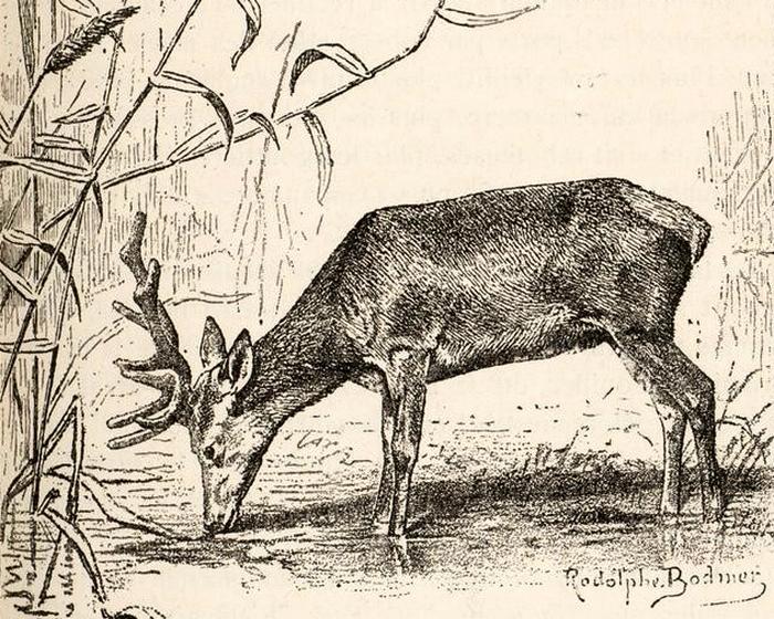 Illustration tirée du Manuel de Vènerie française - Emmanuel Le Couteulx de Canteleu (1890) - Hachette et Cie (Paris) - BnF (Gallica) 22