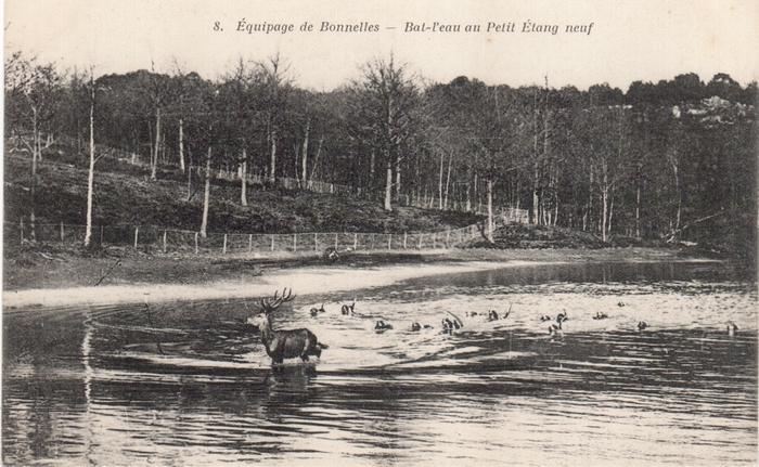 Equipage de Bonnelles Rambouillet (39)
