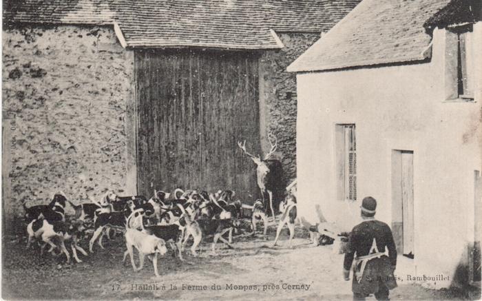 Equipage de Bonnelles Rambouillet (35)