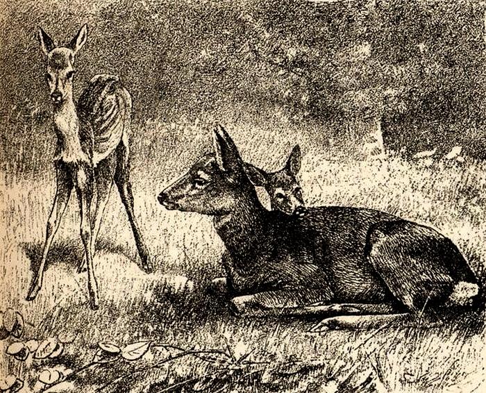 Illustration tirée du Manuel de Vènerie française - Emmanuel Le Couteulx de Canteleu (1890) - Hachette et Cie (Paris) - BnF (Gallica) 17