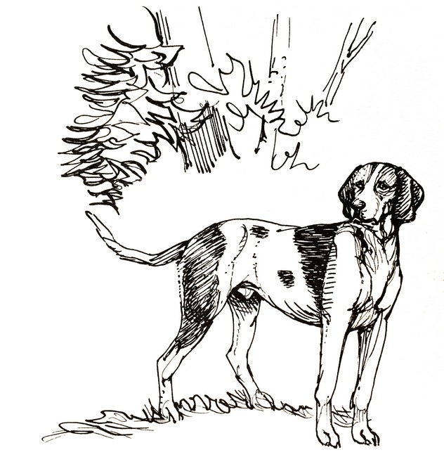 Mohican - Illustration tirée de l'ouvrage Écoute en tête de J. Bost-Lamondie (Édition de 1990)