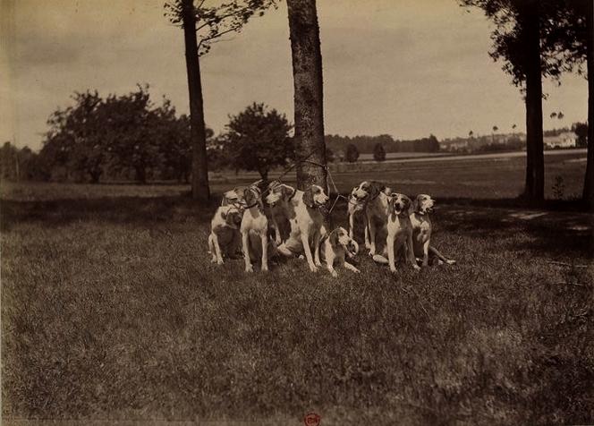 La meute (4) - Tiré de l'ouvrage L'Equipage du marquis de Chambray - Photos de Maurice de Gasté (1894) - Bnf (Gallica)