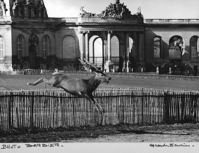 Saison 1965-1966 - Grandes Ecuries de Chantilly - Photo de René Barbier-Petit - Don de M. J.-G. Hallo à la Société de Vènerie