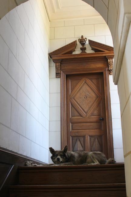 Le loup Cacao, exposé au château d'Azay-le-Ferron (Photo : courtoisie) - www.chateau-azay-le-ferron.com